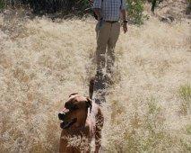 Je hond voorbereiden op lange tochten of een lange reis