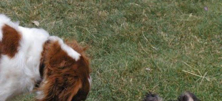 Je nieuwe hond en je andere huisdieren: niet altijd even eenvoudig