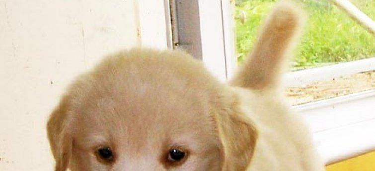 Je puppy opvoeden