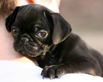 Je puppy zindelijk maken