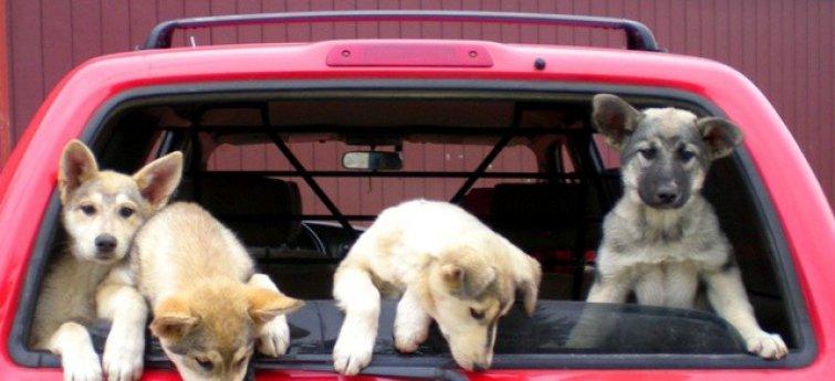 Je wilt een puppy? Denk toch maar twee keer na!