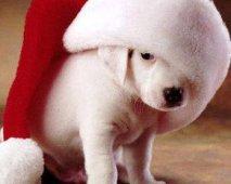 Kerst door de ogen van je hond