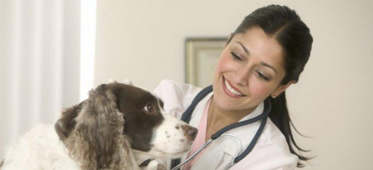 Kies de juiste dierenarts voor je hond