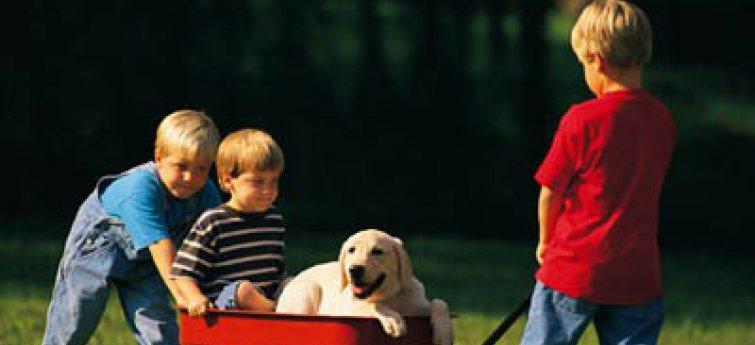 Kinderen en honden: enkele tips om veilig samen te leven