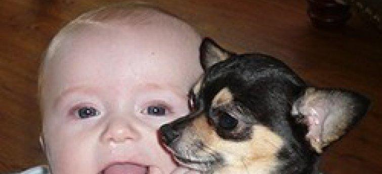 Kinderen en schoothondjes (Toy Dogs)