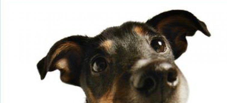 Kriebel je hond eens achter zijn oren!