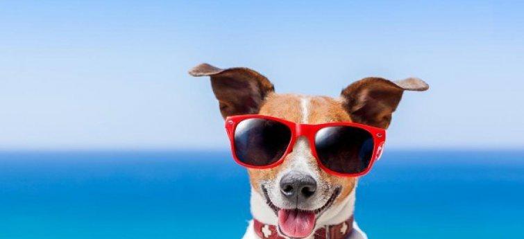 Leuke dingen om deze zomer met je hond te doen