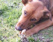 Levensgevaarlijke etenswaren voor honden