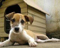 Maak je woning klaar voor een puppy