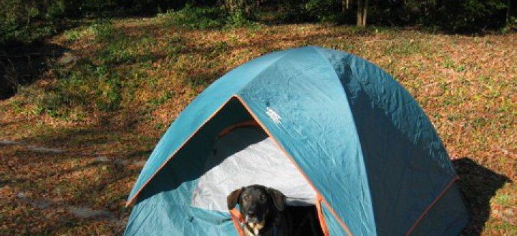 Met je hond gaan kamperen