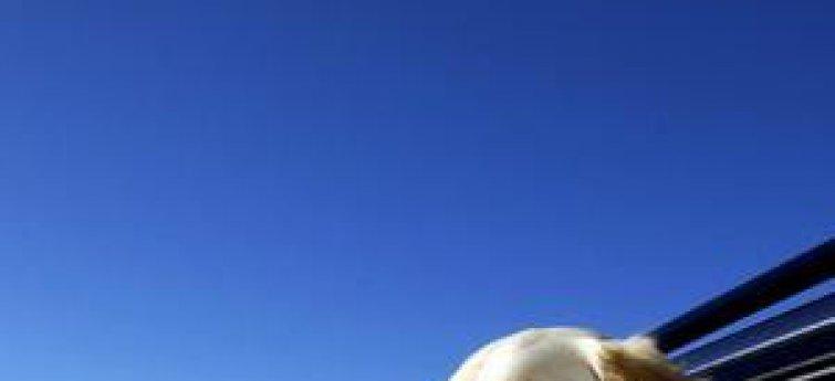 Met je hond op vakantie