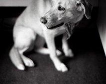 Mijn hond en verlatingsangst
