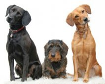 Verschillende honden op een rij