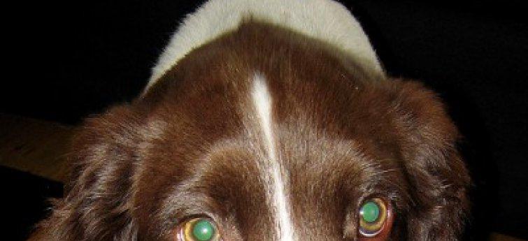 Nierfalen bij je hond