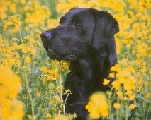 Nog extra tips om je hond naar je toe te laten komen