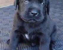 Nomen est omen: de juiste naam voor je hond!