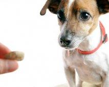 Nuttige hondentrucs of hondenkunstjes