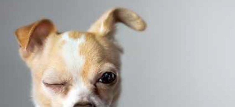 Oogproblemen bij je hond