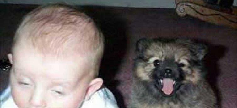 Over nieuwe baby's en honden