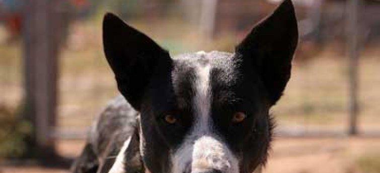 Pancreaskanker bij je hond?