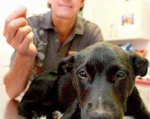 Parvovirose bij honden