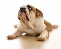 Pijnstillers tegen artritis bij je hond
