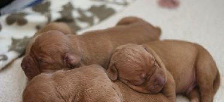 Puppies! Wie ziet ze niet graag?