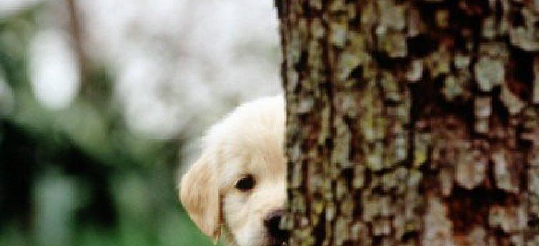 Puppycursus - De puppy ontwikkelingsfasen