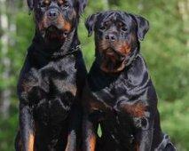 Pups tussen 13 en 18 maanden: Wat te verwachten?