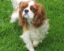 Rashonden: Rashond of Rasloze hond (Kruising)? Discussieer mee!