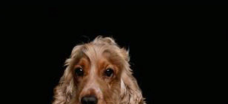 Rauw vlees voor je hond
