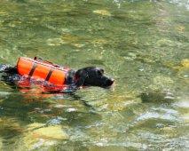 Reddingsvesten kunnen het leven van je hond redden
