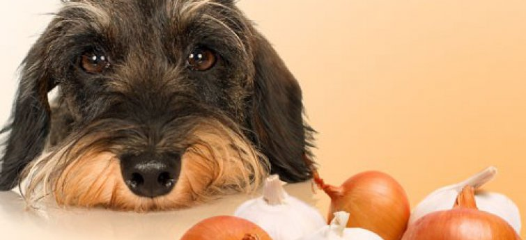 Schadelijke voedingsmiddelen voor honden