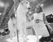 Schoonheidsbehandelingen voor honden: luxe of nodig?