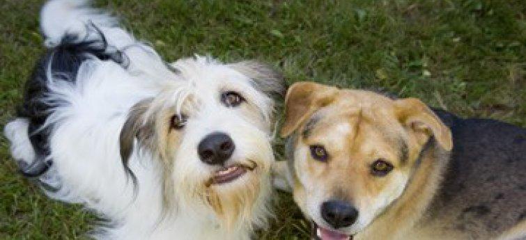 Socialiseren met andere honden
