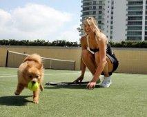 Spelen met je hond: Hondenspelletjes