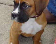 Straffen en belonen van je puppy