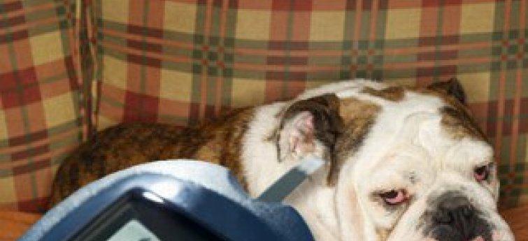 Suikerziekte bij honden