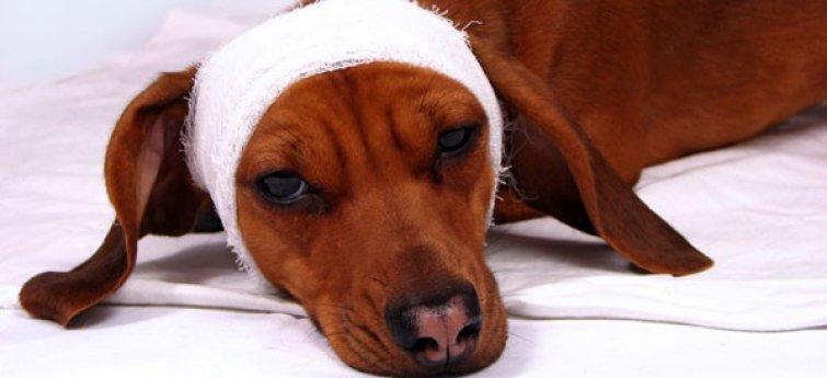 Symptomen van hondenziektes