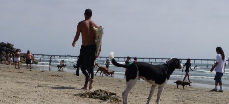 Train je hond zonder leiband