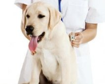 Urinewegeninfectie bij honden