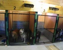 Vakantietijd… Maar de hond kan niet mee!