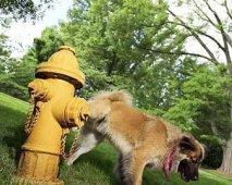 Veelvuldig urineren bij honden