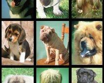 Verschillende hondenrassen