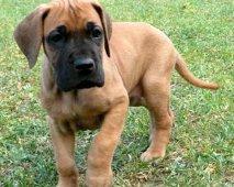 Verwacht je te veel van je puppy?