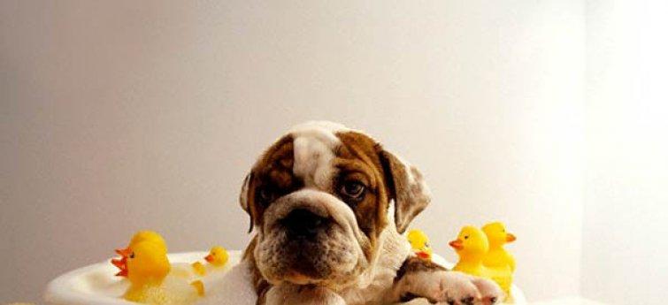 Verzorgingsgids voor honden