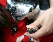 Vijf benodigdheden voor een goede hondenverzorging