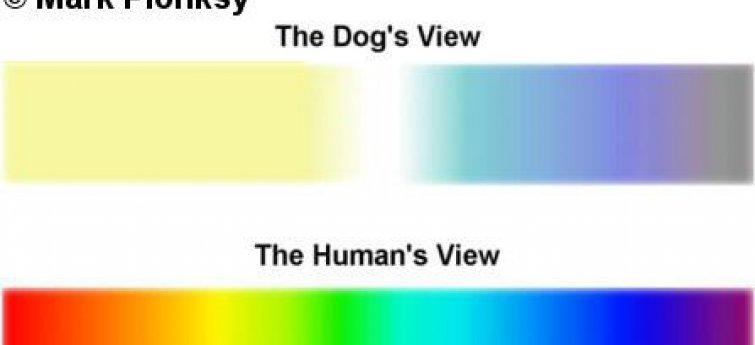Vijf manieren waarop je hond de wereld anders waarneemt dan jij