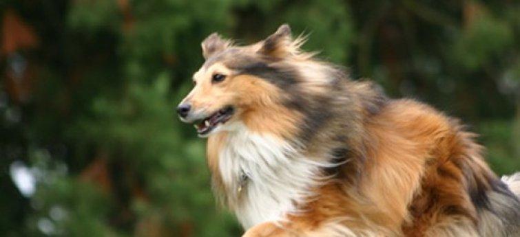 Vijf punten om over na te denken voor je een hond koopt