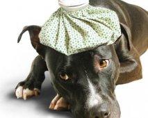Virale infecties en ziektes bij honden